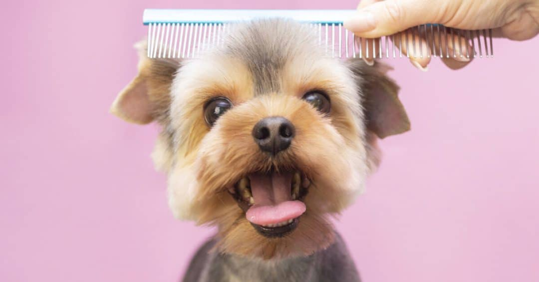 Best Pet Grooming Tampines